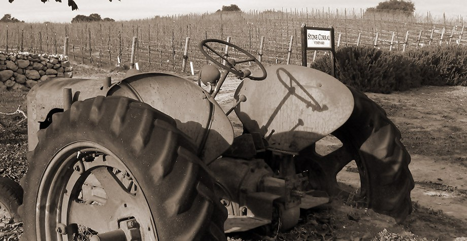 Winemaking Philosophy Photo